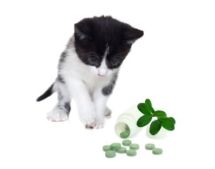 kitten and vitamins