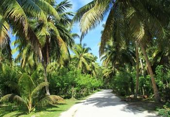 Jardin tropical aux îles Seychelles