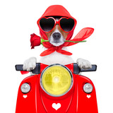 motorcycle valentine dog