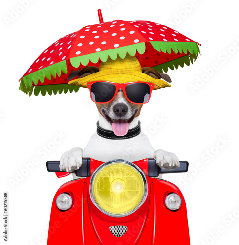 motorcycle dog summer dog