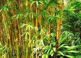 Fototapeta Bamboo background