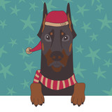 Dobermann in Xmas Cap