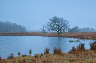 tree by little lake in misty autumn morning