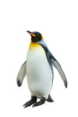 Emperor penguins. isolated on white background