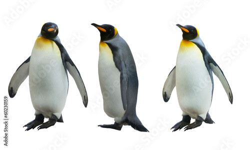 Poster Pinguin Three imperial penguins on a white background