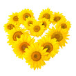 sunflowers in shape of heart isolated on white