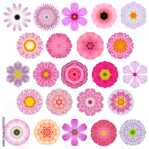 Huge Selection of Various Concentric Mandala Flowers Isolated
