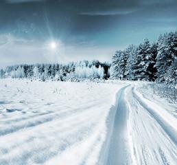 Winter Forest. Landscape.