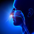 Sinuses - Breathing / Human Anatomy