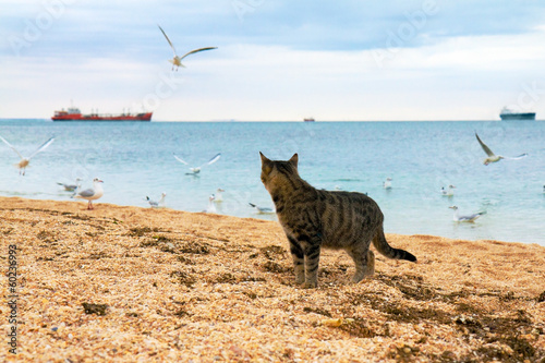 Cat watching seagulls on the beach