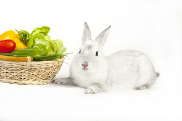 White rabbit with vegetables. Whole background.