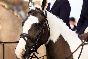 Close up profile of a horse