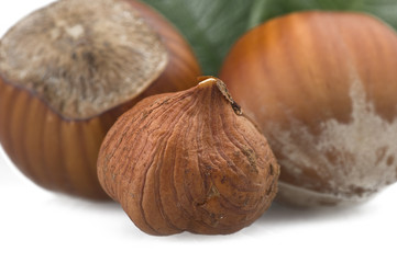 Hazelnuts group close up on the white