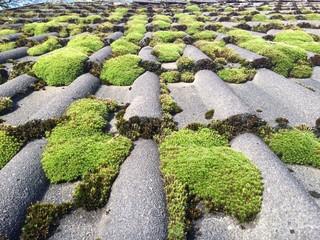 Moos auf Hausdach