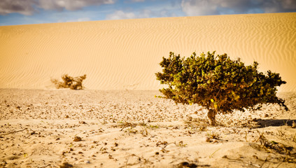 Single plant on the endless desert