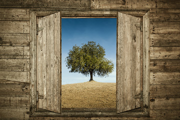 The Tree Behind the Window