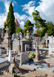 graves at Carcassone Graveyard