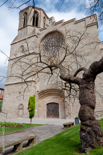Saint Michel cathedral  and tree at Carcassonne