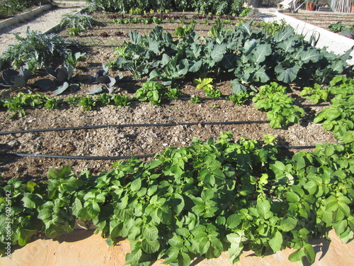allotment with variery of vegetables