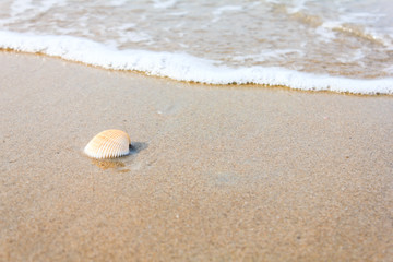 A sea shell on beach