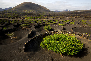 lanzarote spain la geria cultivation winery