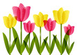 Pink and yellow  tulips border for Your design
