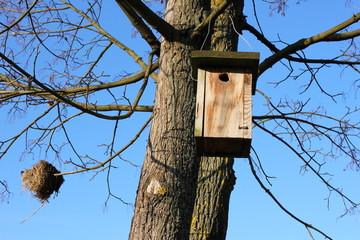 Nistkasten und Nest auf einem Baum