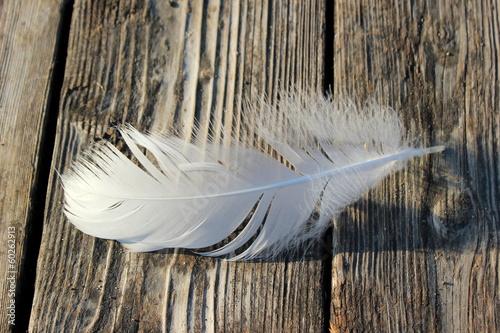 Foto op Plexiglas Zwaan Feder eines Schwans auf einem Holzboden