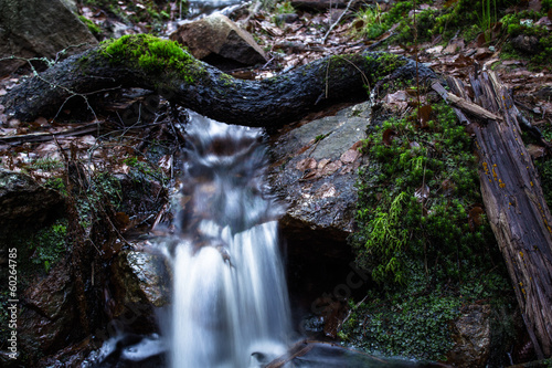 Stream of water flowing under a fallen tree