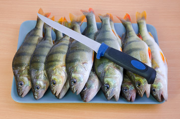 Fresh perch fishes ready for cleaning