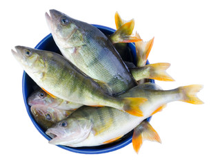 Fresh perch fishes in a bowl