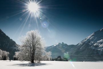 Frozen tree in a snow winter landscape with mountains