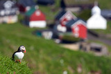 Puffin with a typical nordic village in background
