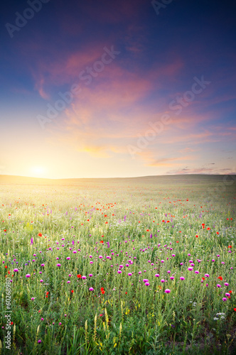 Spring meadow of violet flower.