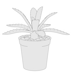 cartoon image of succulent plant