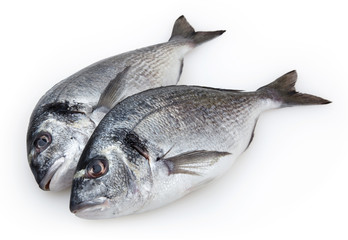 Fish dorado isolated on white background with clipping path