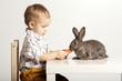 Small pretty boy feeding rabbit with carrot