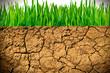 canvas print picture - Trockene Erde und grünes Gras