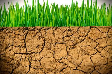 Trockene Erde und grünes Gras