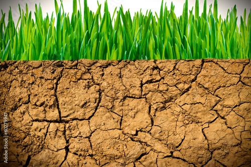 canvas print picture Trockene Erde und grünes Gras