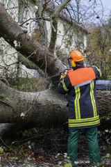 Feuerwehr zersägt umgestürzten Baum