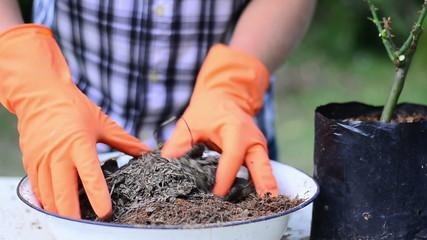 Man is mixing coconut husk fiber and compost organic fertilizer
