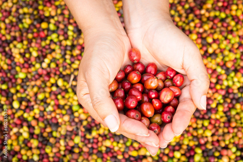 red coffee beans in hands