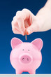 Investment or Savings Concept with a Piggy Bank
