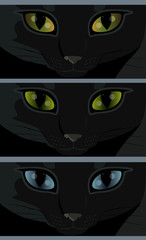 Black cat with yellow, green and blue eyes