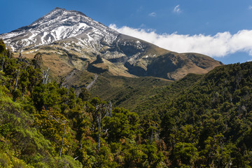 forested slopes of mount Taranaki