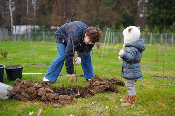 Little girl and her grandmother planting a tree