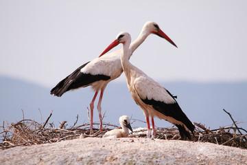 Storks above the rocks
