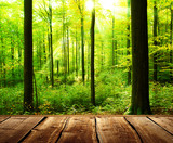 Fototapety Fresh green forest with sunbeams and wooden floor