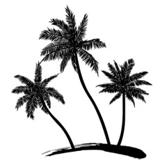Tropical palm trees, black silhouettes on white background. Vect